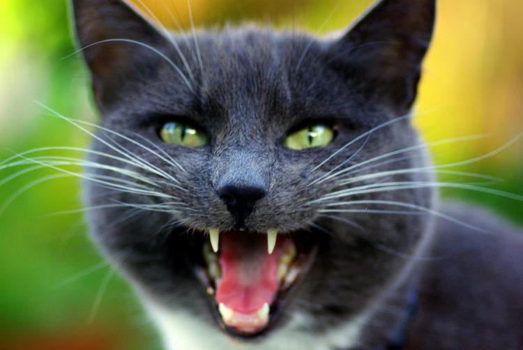 Звуки кошки мр3 скачать