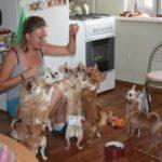 Породы собак для содержания в квартире — 15 лучших вариантов