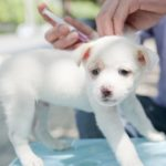 Сколько стоит одна прививка щенку?