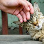 Почему кошки мурлычут?