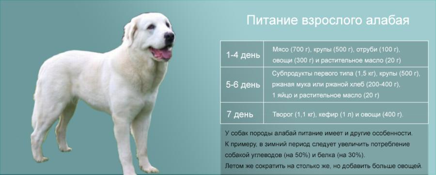 какие витамины нужны для собаки перед вязкой первая карт Старших