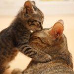 Для чего животным кармашки на ушах