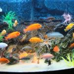 Сколько стоят аквариумные рыбки?
