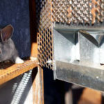 Сколько стоит разведение кроликов?