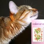 Почему коты и кошки любят валерьянку?