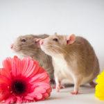 Сколько стоят мыши?