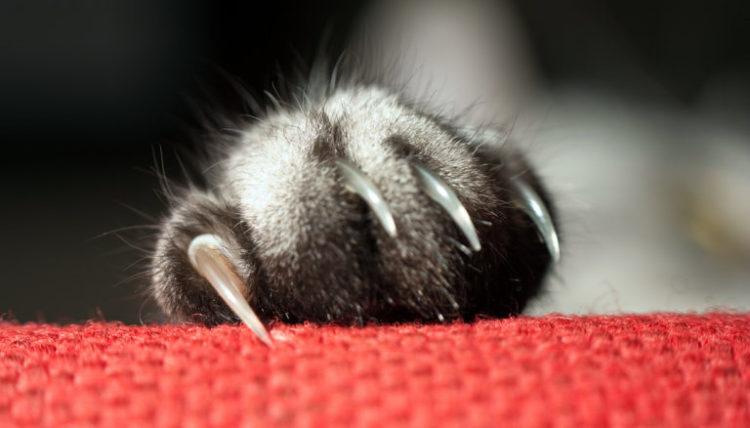 Сколько стоит удалить когти кошке