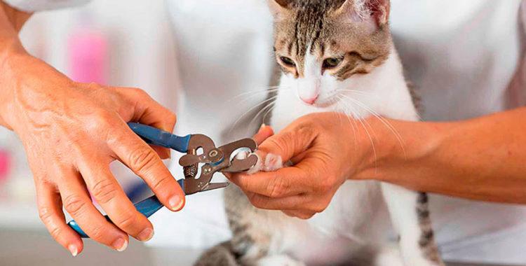 Сколько стоит удалить когти кошке thumbnail