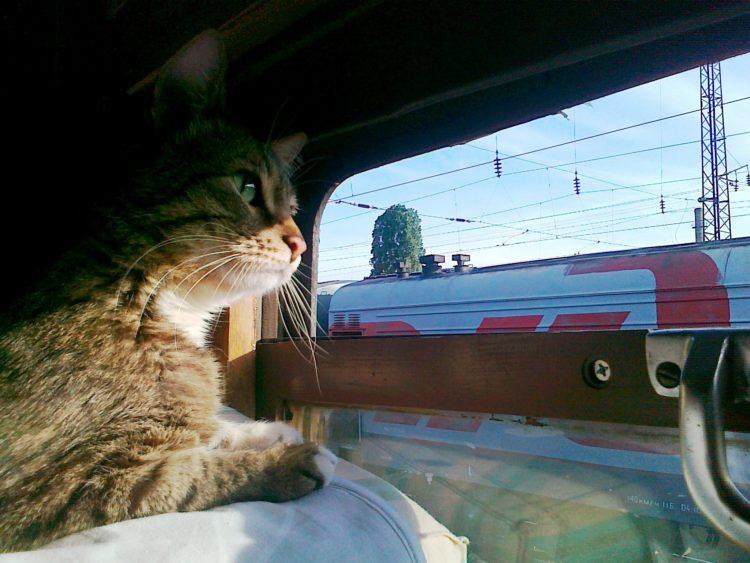 Животные в поезде — правила перевозки