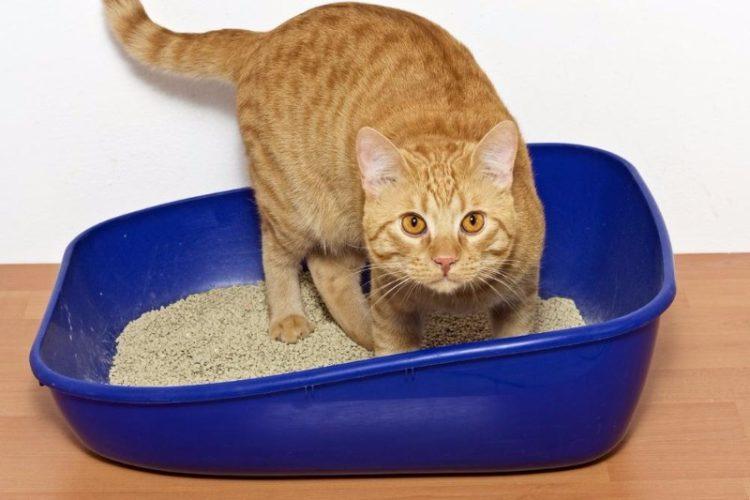 Как приучить котенка в 1,5 месяца к лотку в квартире легко и быстро: советы ветеринара, как приучить уличного кота к лотку