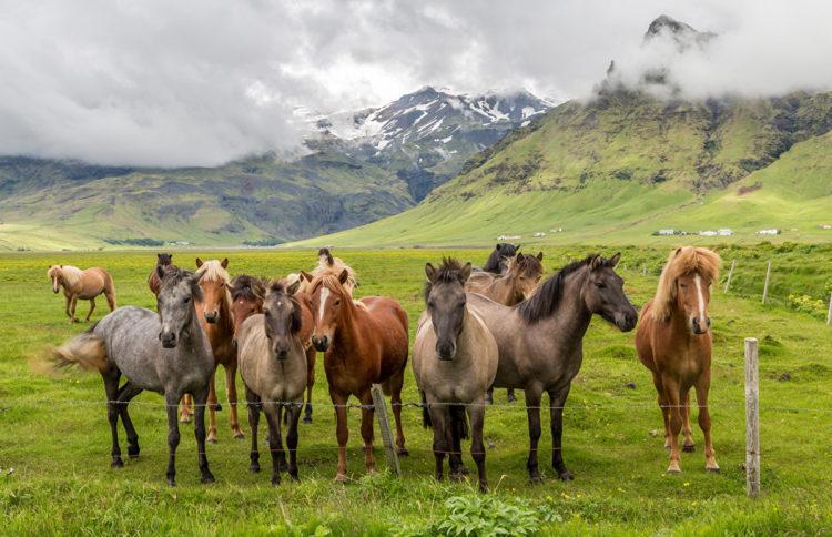 Разнообразные масти лошадей чубарая лошадь