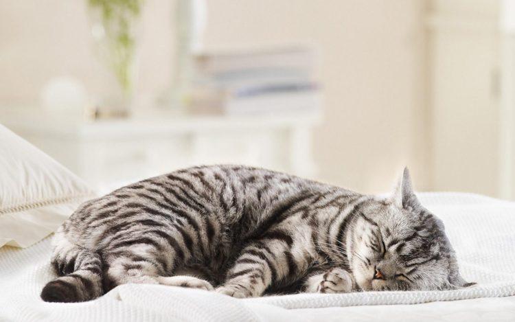 Сколько часов в сутки спят кошки, факторы, влияющие на продолжительность сна