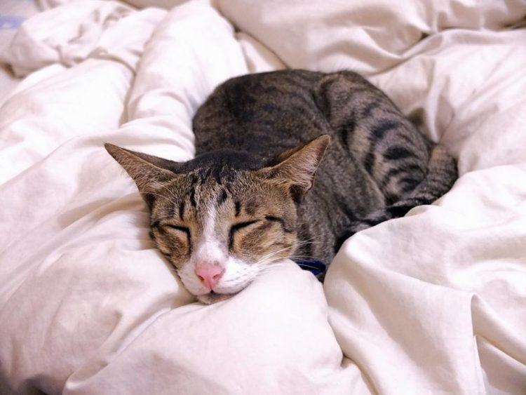 Эмфизема у кошек симптомы,диагноз, лечение, профилактика,