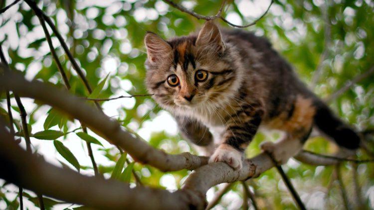 корм для кошек с витаминами