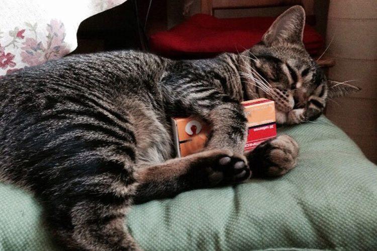 Эмфизема  тяжлая патология лгких у кошек