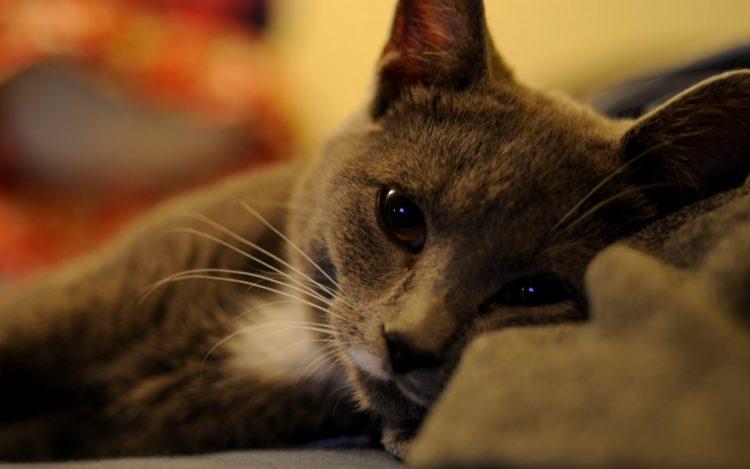 Как распознать симптомы рака у кошек и котов