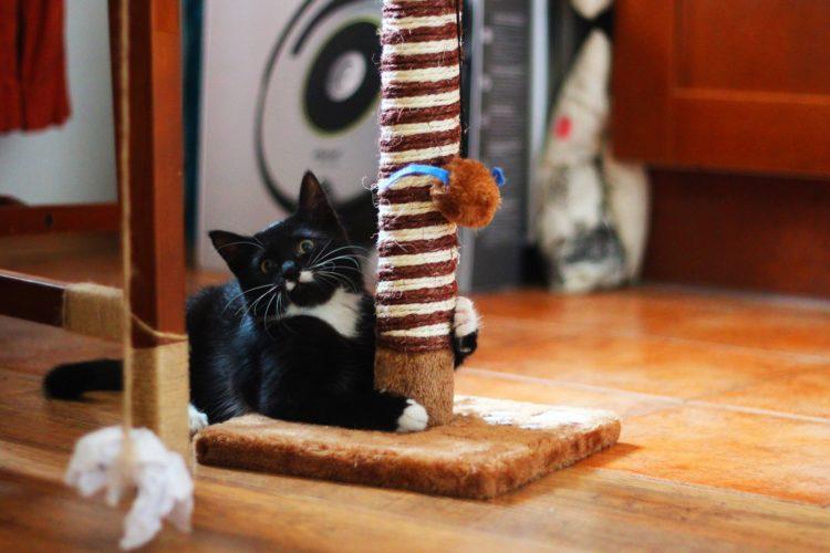 Как приучить взрослую кошку и котенка к когтеточке?